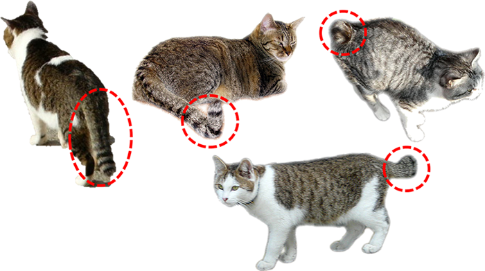 長崎尾曲がりネコの写真